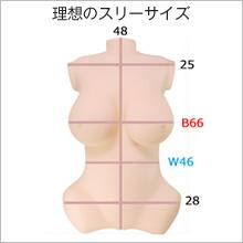 リアルボディ内部構造